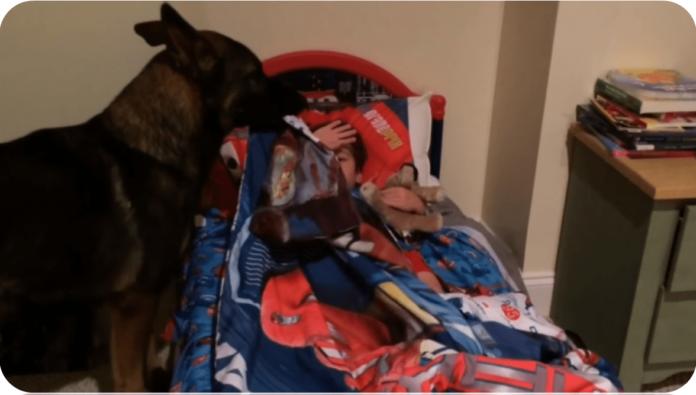 mama-perro