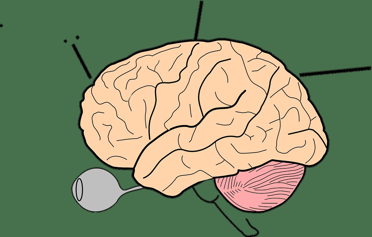 quimica-cerebro